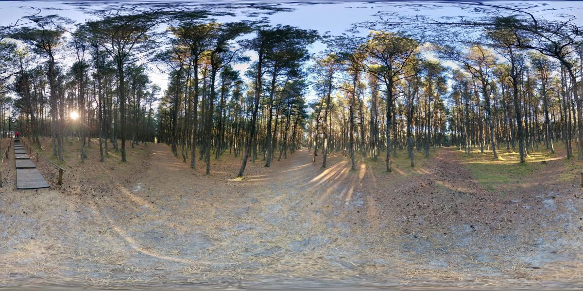 На Куршской косе - Танцующий лес