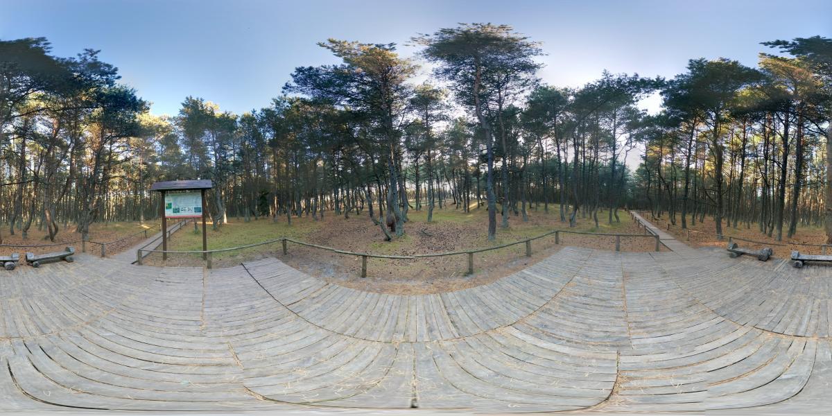 На Куршской косе - Танцующий лес - смотровая площадка